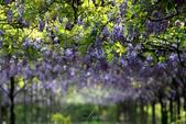 紫藤咖啡園:DSC_0519.jpg