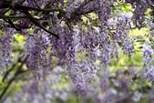 紫藤咖啡園:DSC_0548.jpg