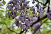 紫藤咖啡園:DSC_0550.jpg
