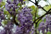 紫藤咖啡園:DSC_0551.jpg