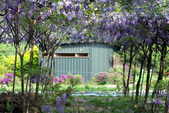 紫藤咖啡園:DSC_0588.jpg