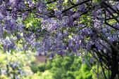 紫藤咖啡園:DSC_0585.jpg