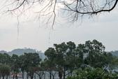 大湖公園霧之晨:DSC_3163.jpg