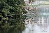 大湖公園霧之晨:DSC_3242.jpg