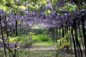 紫藤咖啡園:DSC_0514.jpg