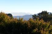 阿里山之旅(三):DSC_2465.jpg