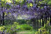 紫藤咖啡園:DSC_0518.jpg