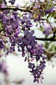 紫藤咖啡園:DSC_0571.jpg