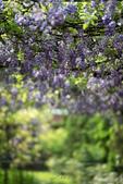 紫藤咖啡園:DSC_0579.jpg
