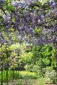 紫藤咖啡園:DSC_0580.jpg