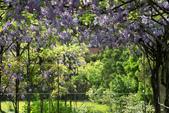 紫藤咖啡園:DSC_0583.jpg