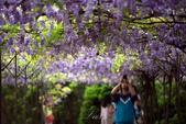 紫藤咖啡園:DSC_0542.jpg