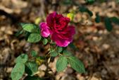 紫藤咖啡園:DSC_0530.jpg
