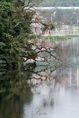 大湖公園霧之晨:DSC_3240.jpg