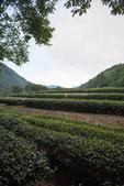 武陵農場之旅:20160912-DSC_5117.jpg
