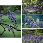 紫藤咖啡園:相簿封面