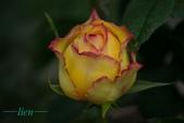 玫瑰花語:1525395145240-01.jpeg
