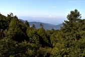 阿里山之旅(三):DSC_2613.jpg