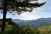 阿里山之旅(三):DSC_2644.jpg