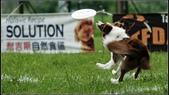 2013 夏季飛盤狗大賽:DSC02313-1.jpg