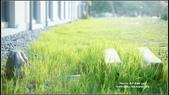 假日陽光午後~輕日系風習拍:DSC00778.JPG