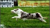 2013 夏季飛盤狗大賽:DSC02370.JPG