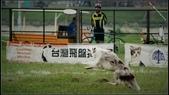 2013 夏季飛盤狗大賽:DSC02372.JPG