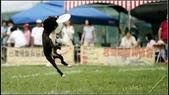 2013 夏季飛盤狗大賽:DSC02487.JPG