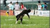 2013 夏季飛盤狗大賽:DSC02491.JPG
