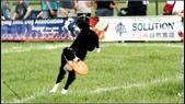2013 夏季飛盤狗大賽:DSC02512.JPG