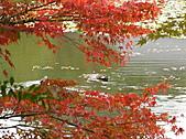 日本關西自由行:京都 - 龍安寺
