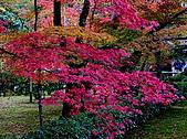 日本關西自由行:金都-金閣寺
