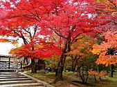 日本關西自由行:京都-仁和寺