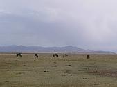 新疆 - 北疆:巴音布魯克草原