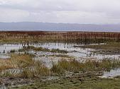 新疆 - 北疆:巴音布魯克草原 - 天鵝湖