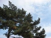 黃山 2012 10 20:照片 184.jpg