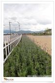 新社花海~101.11.26:5.今年停車場規劃的區域蠻多的.jpg