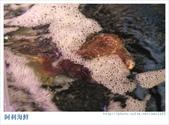 阿利海鮮~101.09.10:5.長的很奇怪的活物.jpg