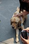 2013泰迪熊台中樂活嘉年華(秋紅谷&草悟大道&市民廣場)~102.11.30:導盲犬
