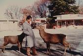 河內長野:奈良的鹿