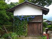 名古屋:爬上樹蔭