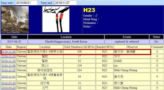 黑面琵鷺H23於20150621繫放後在台紀錄-20161126-縮-後製.jpg - 黑面琵鷺