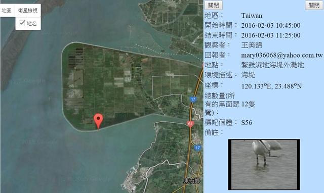 黑琵S56在鰲鼓濕地登錄紀錄-20160203-王美錦.jpg - 黑面琵鷺