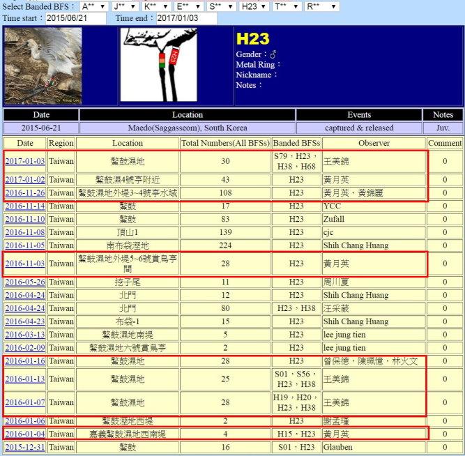 黑面琵鷺H23於20150621繫放後在台紀錄-20170103-縮-後製.jpg - 黑面琵鷺