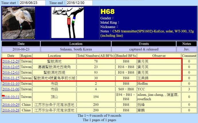 黑面琵鷺H68於20160623繫放後在台紀錄-20161229-縮-後製.jpg - 黑面琵鷺