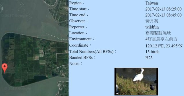 黑琵H23在鰲鼓濕地登錄紀錄-20170213-黃月英-縮.jpg - 黑面琵鷺