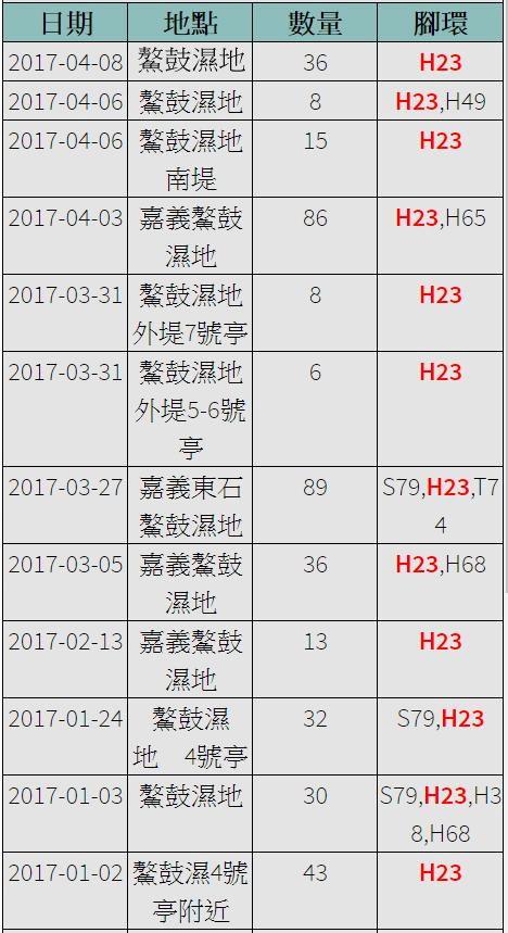 黑琵H23在台紀錄-20170102之後-20170408-縮.jpg - 黑面琵鷺