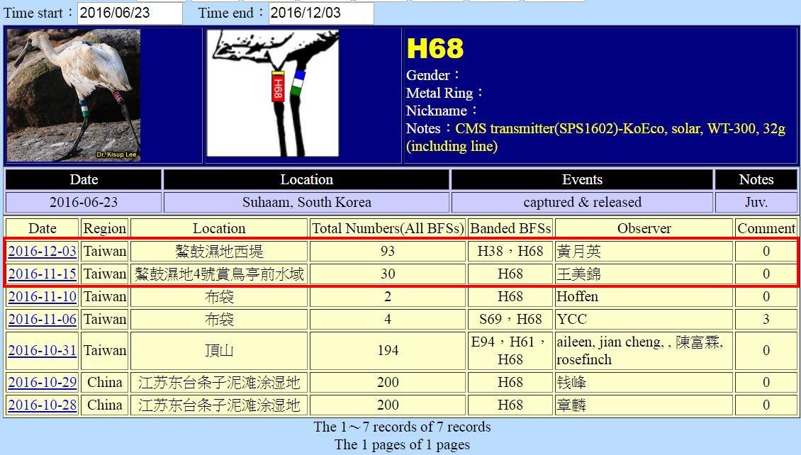 黑面琵鷺H68於20160623繫放後在台紀錄-20161203-後製.jpg - 黑面琵鷺
