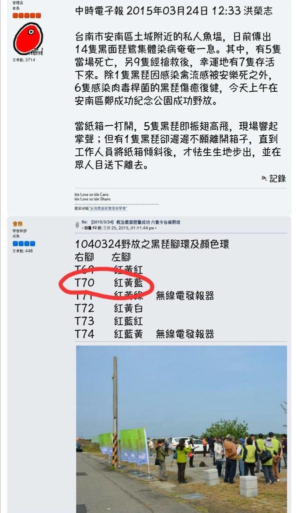 T70中毒救治後野放報導-中國時報-20150324.jpg - 黑面琵鷺