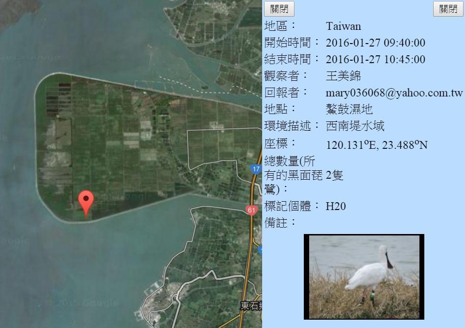 黑琵H20在鰲鼓濕地登錄紀錄-20160127-王美錦.jpg - 黑面琵鷺